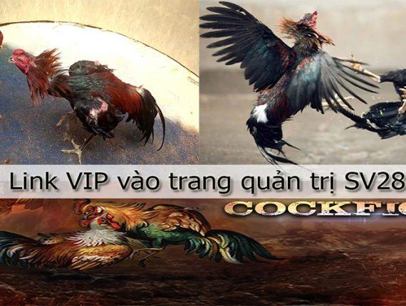 SV288 – Link VIP và trang quản trị đá gà SVV288 SSV288
